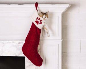 chat-dans-une-chaussette-de-noel
