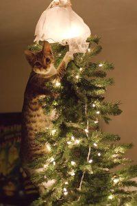 chat-en-haut-sapin-de-noel
