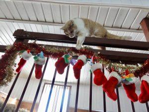 chat-joue-avec-des-chaussettes-de-noel