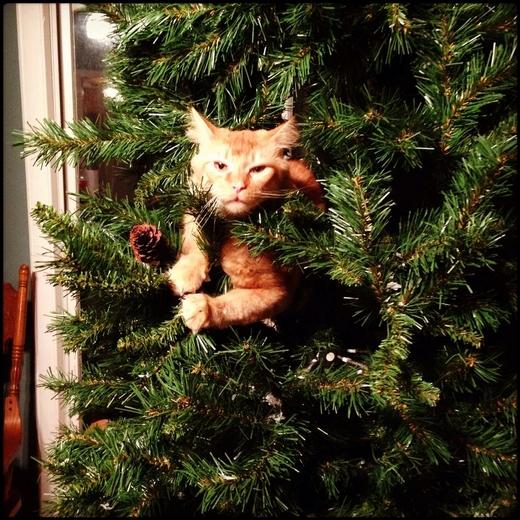 chat-roux-dans-sapin-de-noel