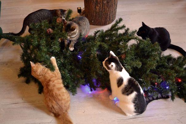 chats-attaquent-sapin-de-noel