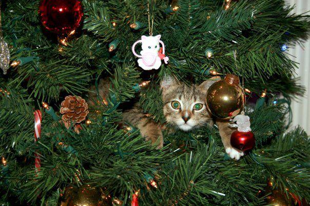 chat-dans-sapin-de-noel