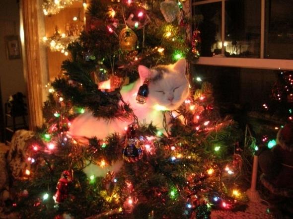 chat-dans-un-sapin-illumine