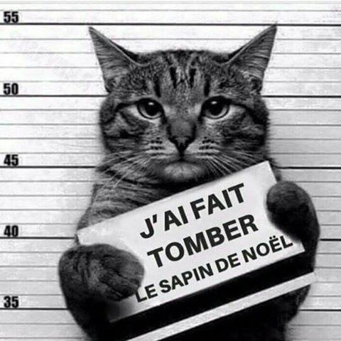 chat-jai-fait-tomber-le-sapin-de-noel