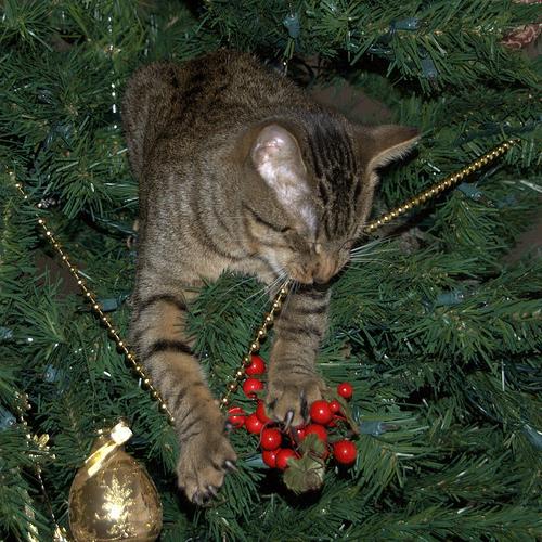 chat-mange-une-guirlande-de-noel