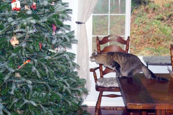 chat-pret-a-sauter-dans-sapin-de-noel