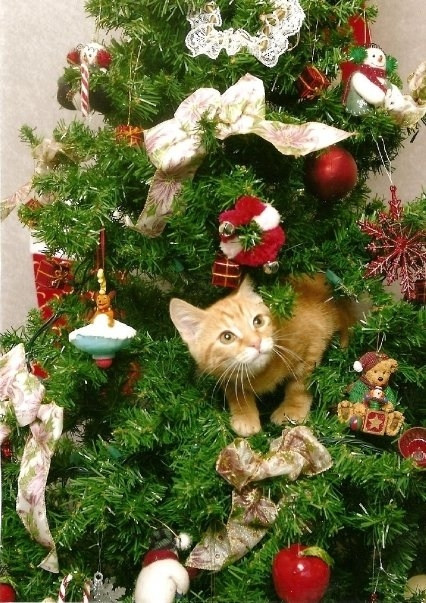 chat-roux-dans-sapin-de-noel-2
