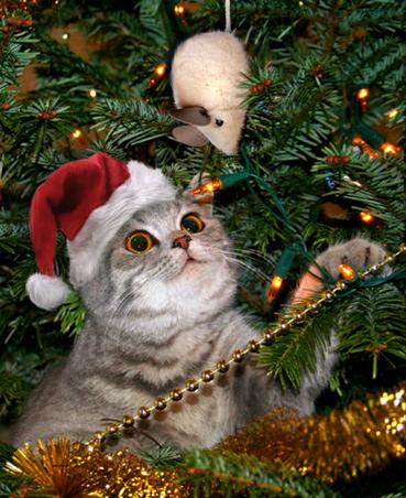 chat-voit-une-souris-dans-un-sapin-de-noel