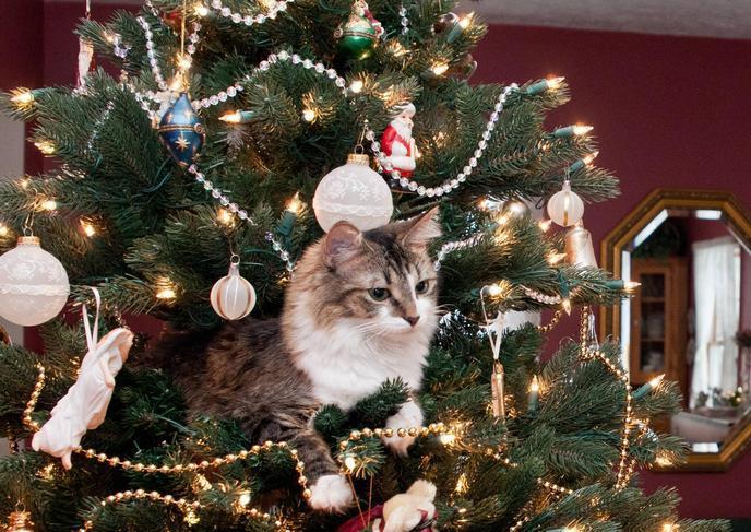 chat allongé dans un sapin de Noël