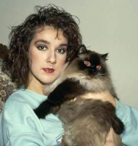 celine-dion-et-son-chat
