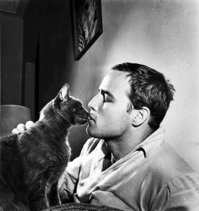 marlon-brando-et-son-chat