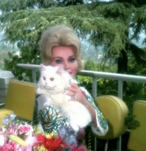 zsa-zsa-gabor-et-son-chat