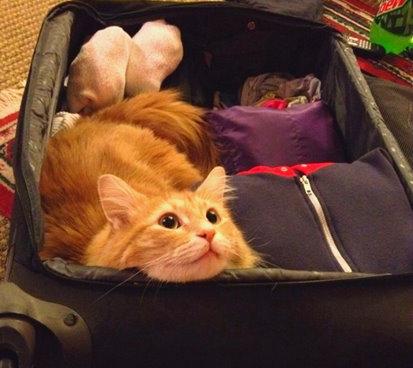 Comment faire garder mon chat - valise