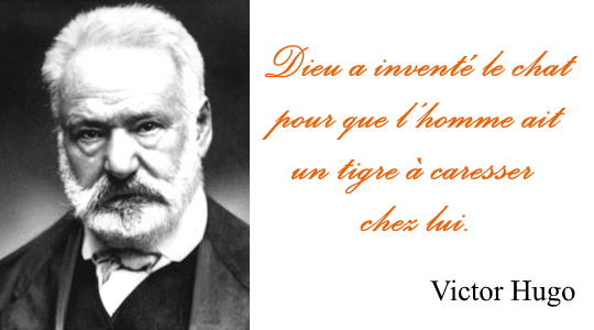 Victor Hugo chat tigre - Citations sur les chats