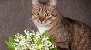 Les plantes toxiques pour les chats