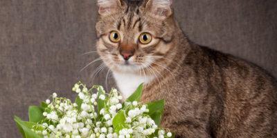 Muguet toxique chats