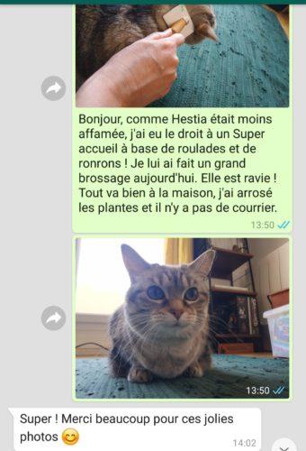 Garde de chat à Lyon - Message quotidien