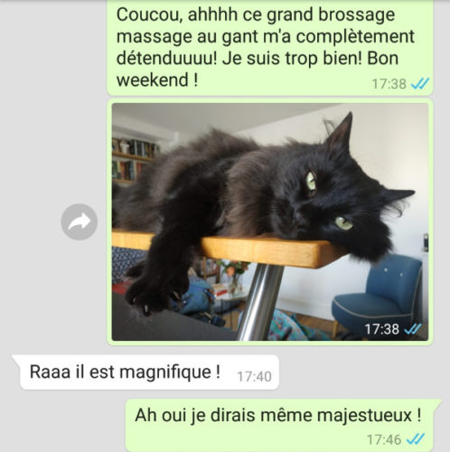 Garde de chat à Marseille - Message quotidien