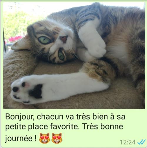 Garde de chat à Toulouse - Message quotidien